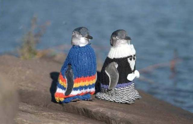penguinsinsweaters1011.jpg