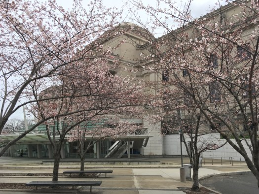 Brooklyn Museum With Cherry Trees