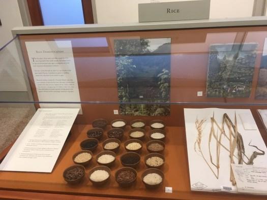 Herbarium, New York Botanical Garden