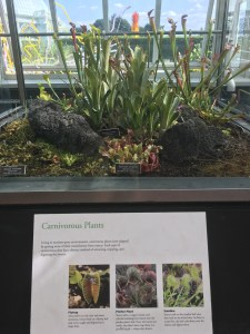 Carnivorous Plants, New York Botanical Garden
