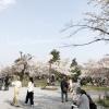 嵐山の桜 2018