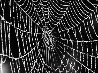 【閲覧注意】窓辺の女郎蜘蛛が弱ってきてる…助けたい気もするけど