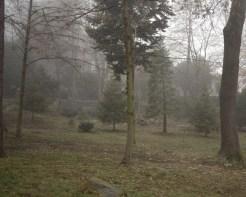 Boyana Churchyard in the Morning Fog