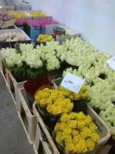 Roses for Sale - For the Eyes but not for the Nose!
