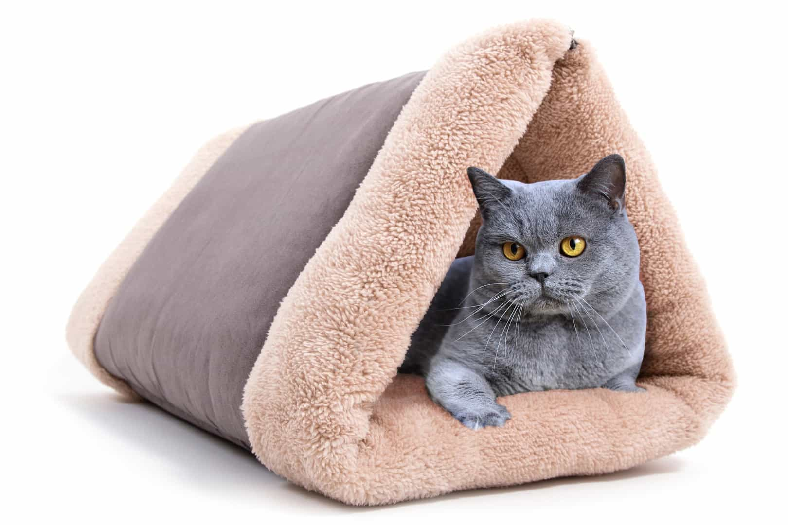 cat tunnel sofa price brown leather with nailheads 10 best ideas perfect gifts for lovers