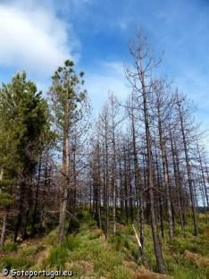 Parc Naturel de Montesinho