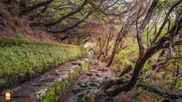 Levada 25 fontes - Madeira