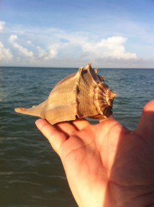 whelk side view