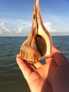 whelk occupied
