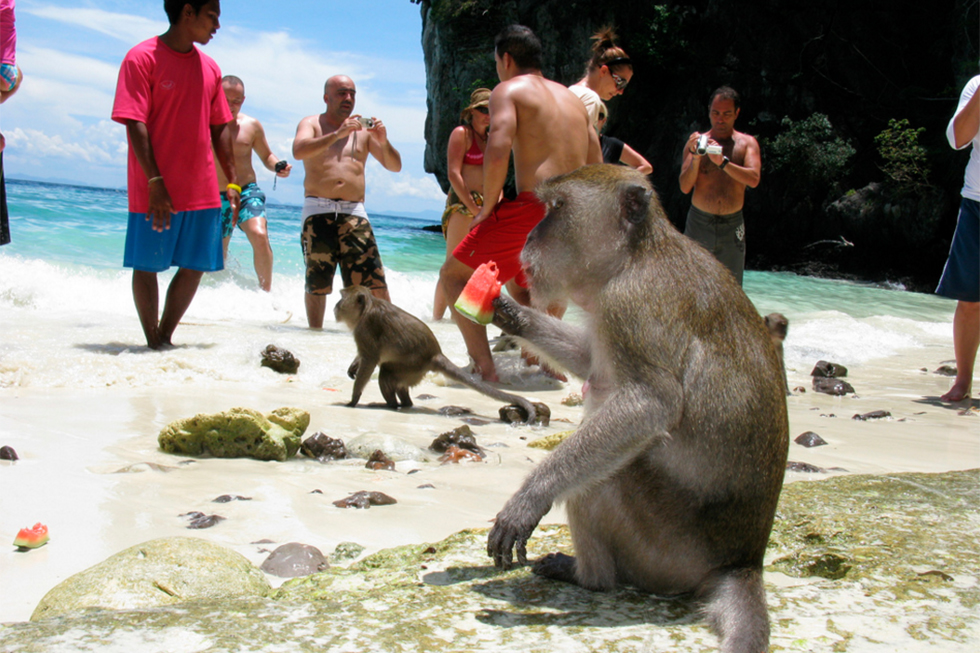 Monkey Beach in Koh Phi Phi