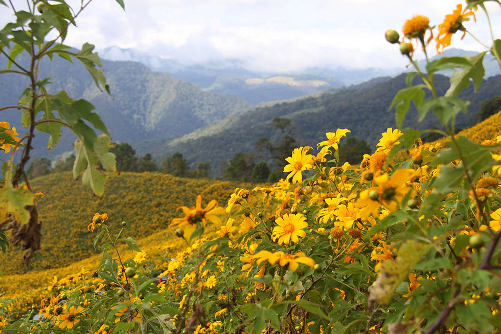 Mae Hong Son's beautiful mountain landscape