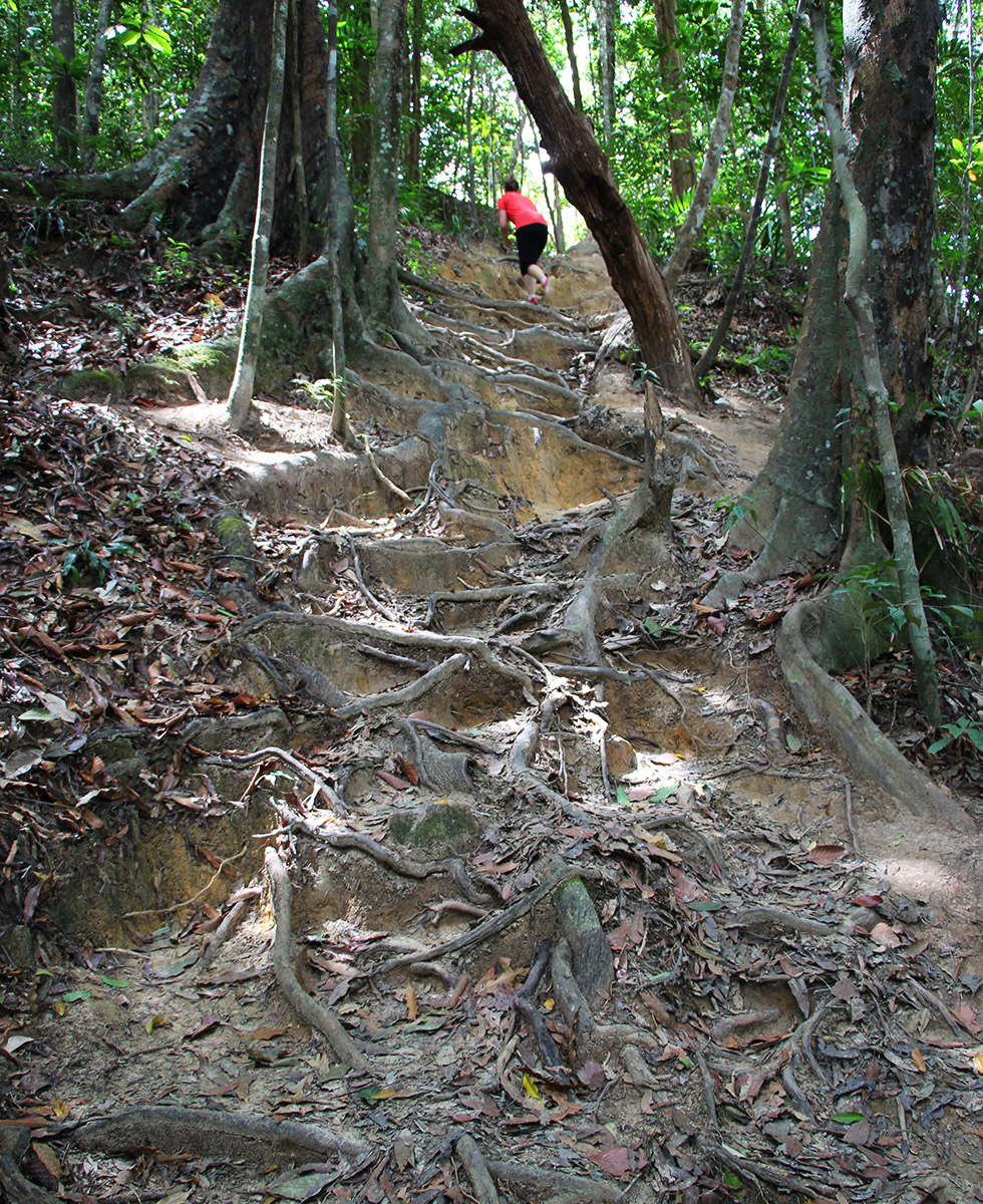 Up, up, up! - Khao Ngon Nak Trail in Krabi