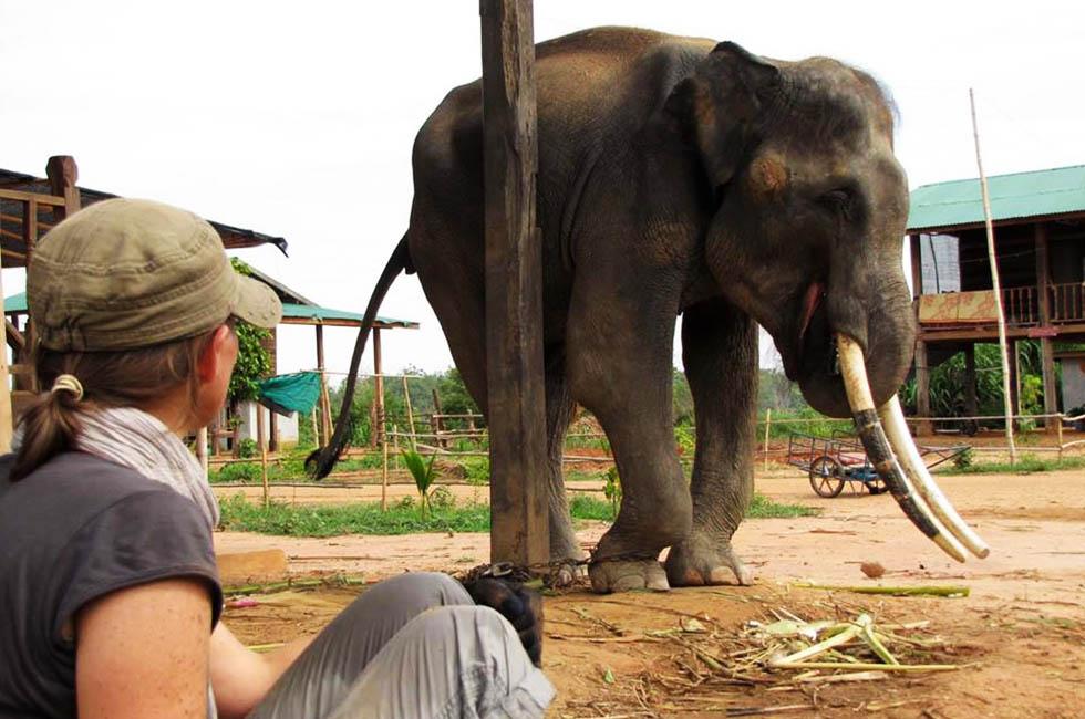 Tong Teh Elephant