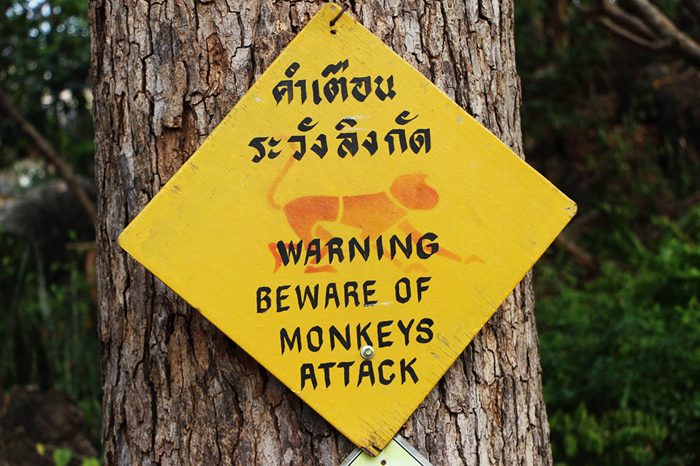 Beware of monkeys in Phetchaburi