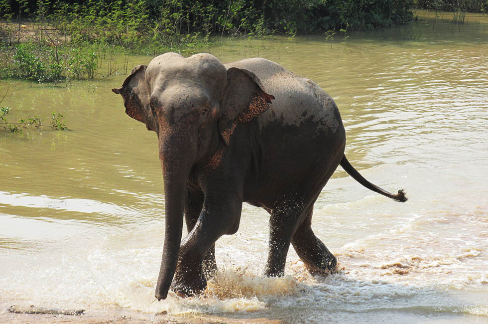 Surin Project Thailand