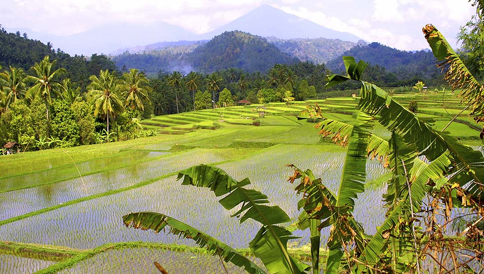 You'll come across beautiful rice paddies