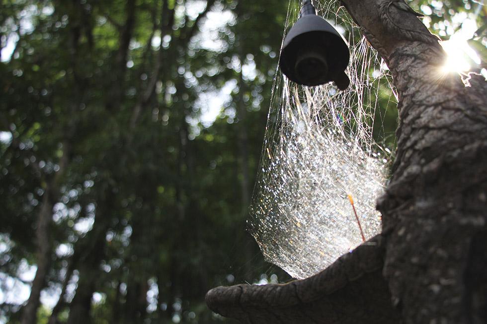 Spiderweb at Wat Analayo in Phayao