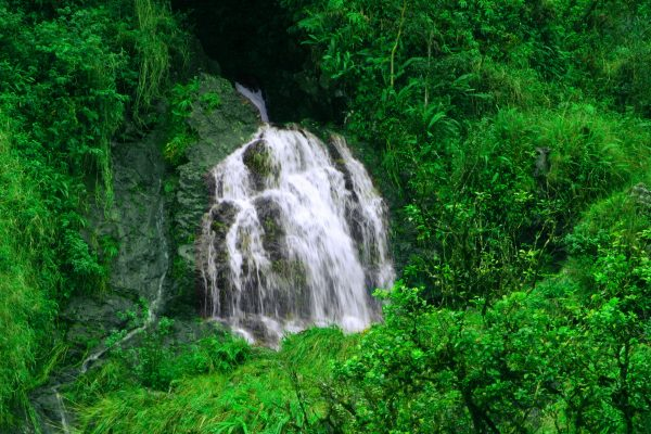 Half Day Central Maui Tour to Haleakala and Iao Valley