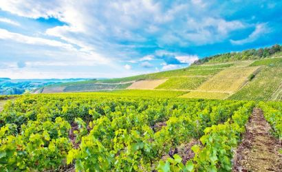 Burgundy Wine Tour from Paris
