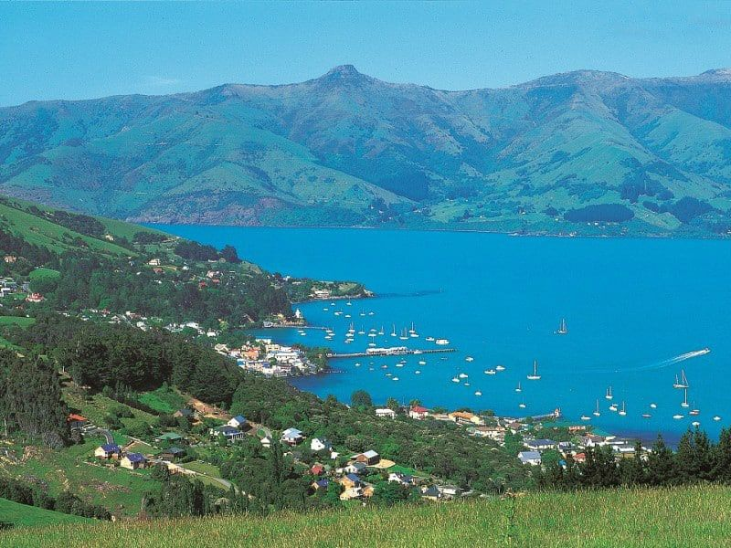 Harbour Nature Cruise From Akaroa