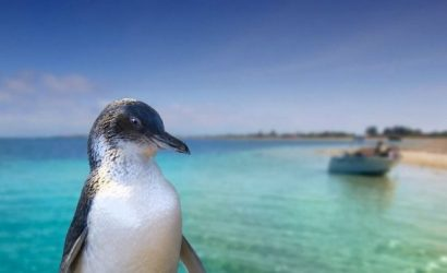Penguin Island & Caversham Wildlife Park Day Tour