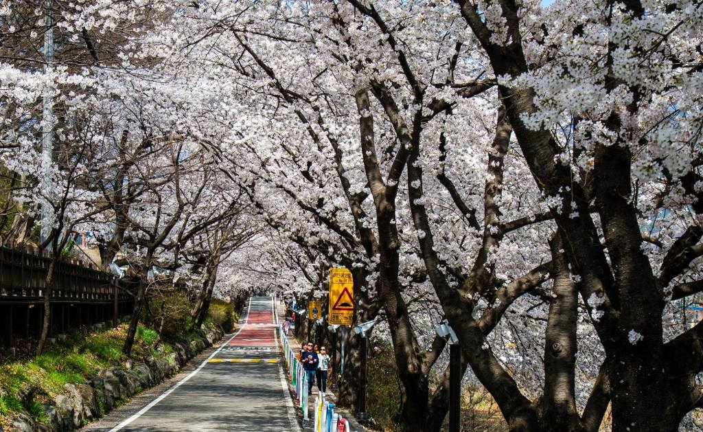 Hwagae Cherry Blossom Festival in Hadong, South Korea