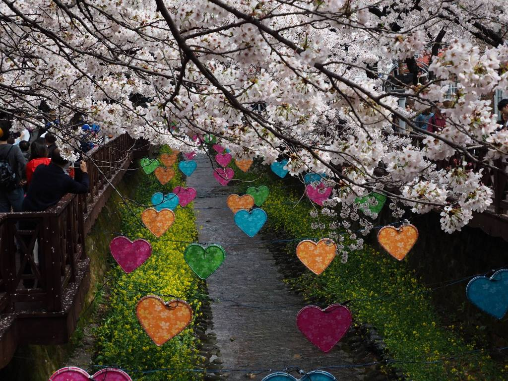 Yeojwhacheon area of the Jinhae Cherry Blossom Festival.