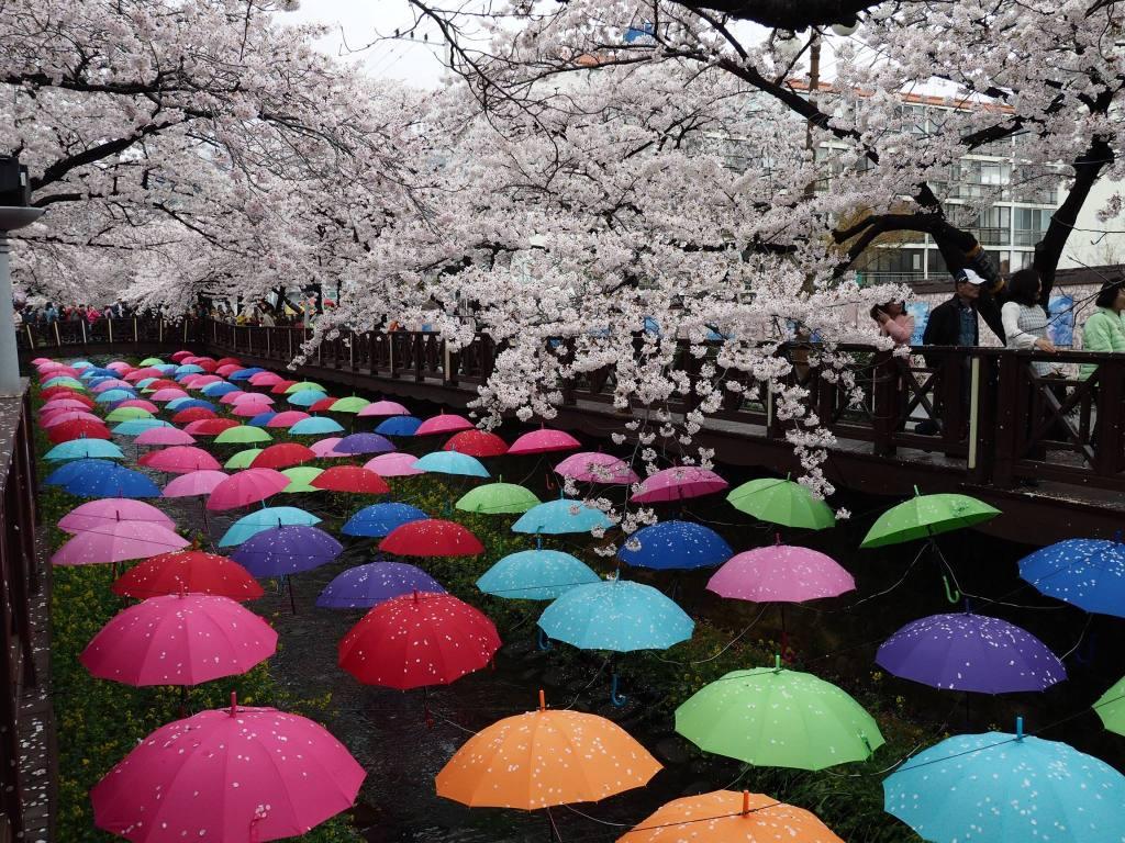 Art installations at Jinhae Cherry  Blossom Festival.