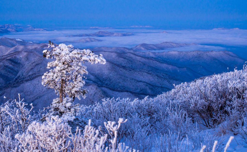 Snow Flowers while hiking Taebaeksan in Winter.