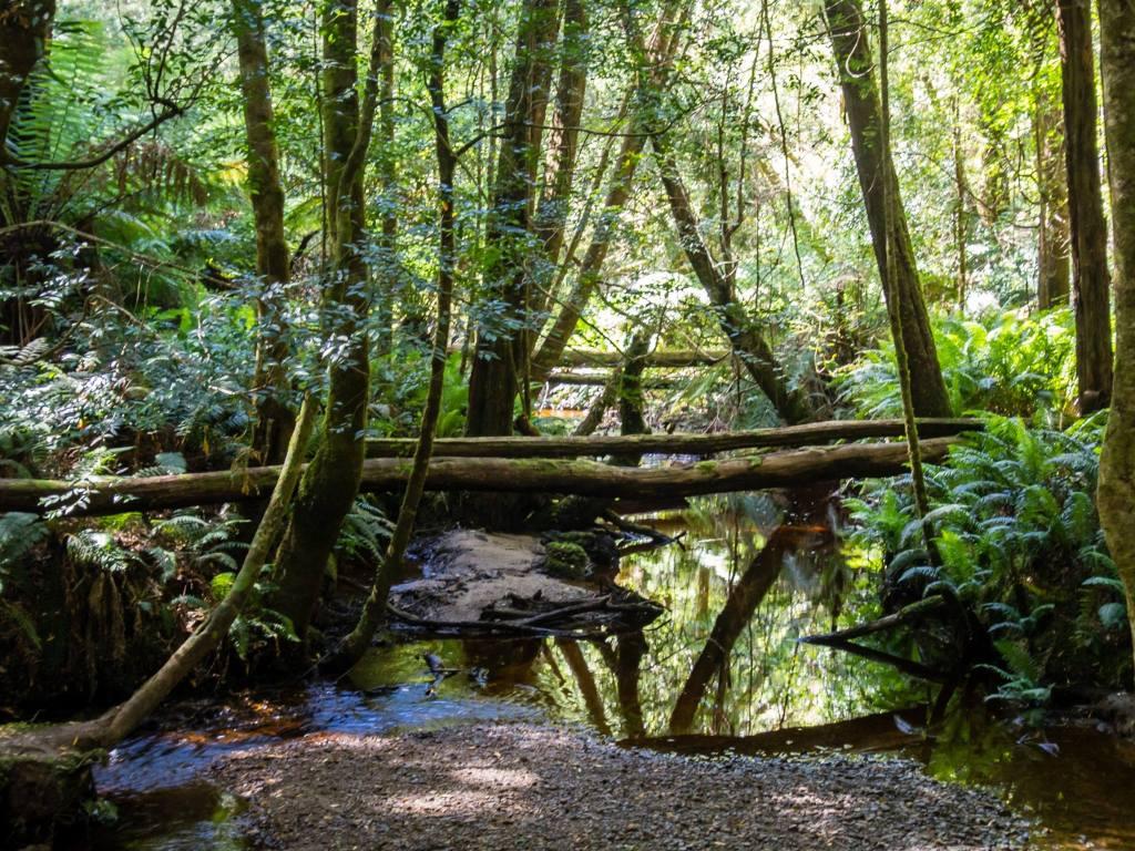 Hogarth Falls Track Creek