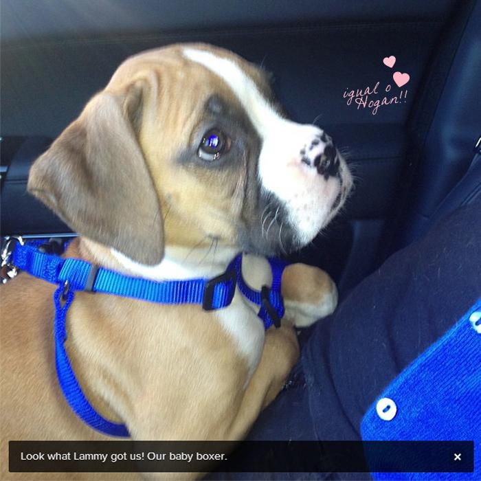 khloe-kardashian-baby-dog-filhote-Bernard-Hopkins-Bee-fofo-lamar-blog-got-sin-02