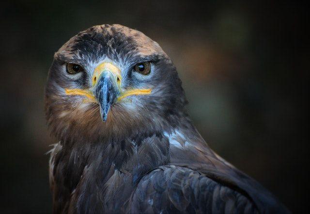 bird portrait magnification