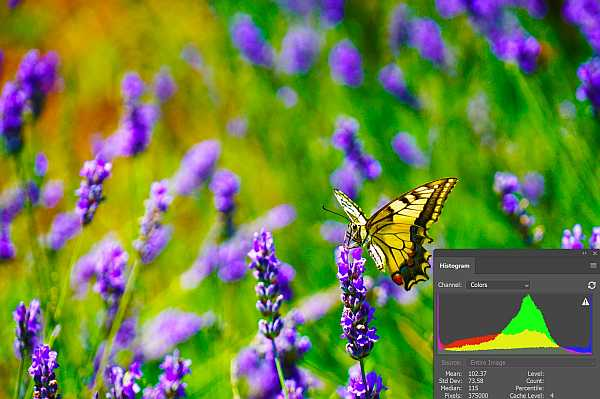Butterfly image histogram