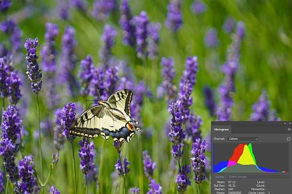 Butterfly photo histogram