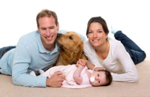Carpet Cleaning  Commercial Cleaning  Restoration