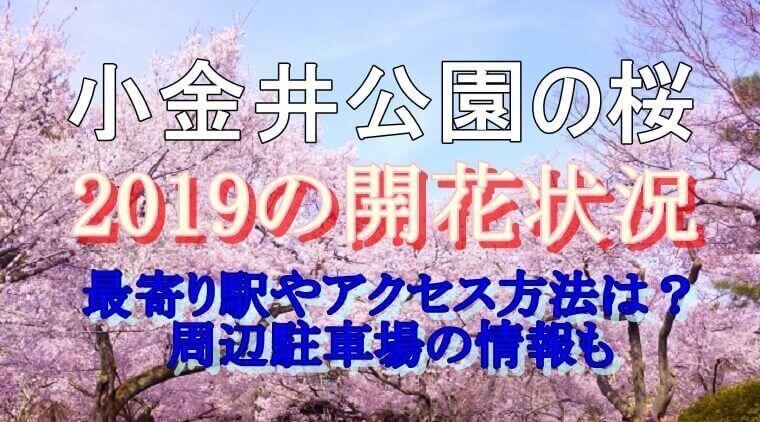小金井公園の桜まつりの開花状況とアクセス方法・周辺の駐車場についてご紹介しています