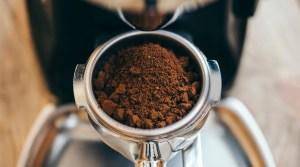 fresh coffee beans online