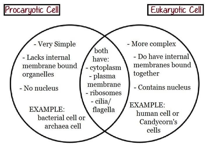 Prokaryotic vs Eukaryotic  Volleyball is like a Eukaryotic Plant Cell