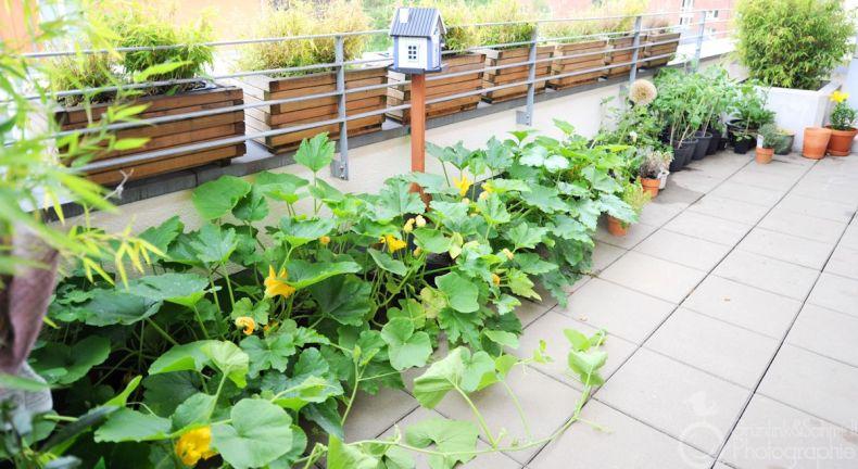 Gourmari's Urban Garden.