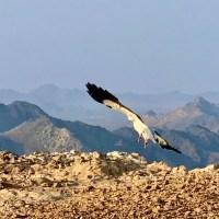 The haunted mountain of Masirah Island