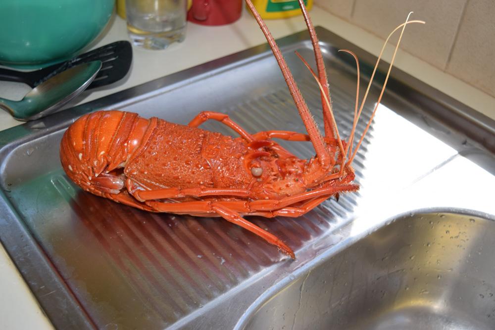 Crayfish-boiled-141116