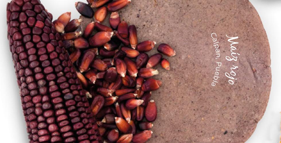 tortillas de maíz maíz rojo