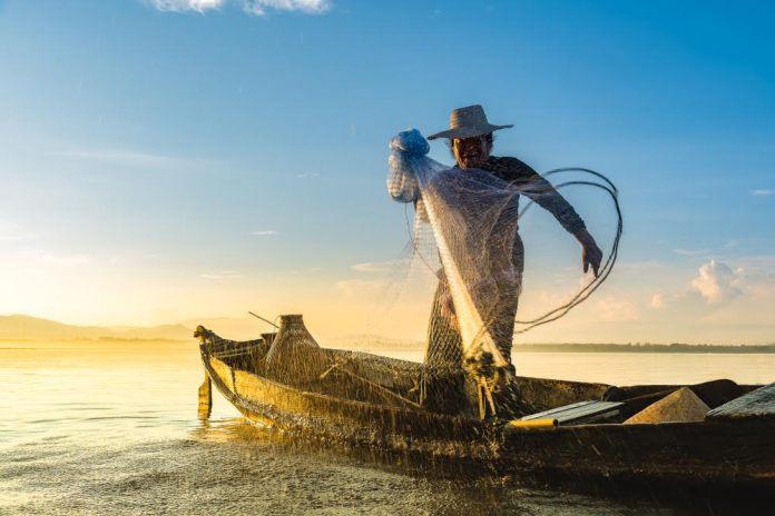 Cuánto cuesta un kilo de pescado en México? | Gourmet de México