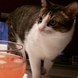 receta gin tonic cantidades receta casera