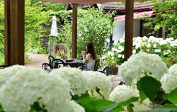 六甲オルゴールミュージアム アジサイに囲まれたガーデンでランチやティータイム ~可憐に咲く花々と共に優雅な時間を~