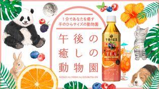 キリンビバレッジ史上初! スマートフォンで遊べる「午後の癒しの動物園」開園! 「午後の紅茶 Fruit×Fruit TEA オレンジ&ベリー」新発売