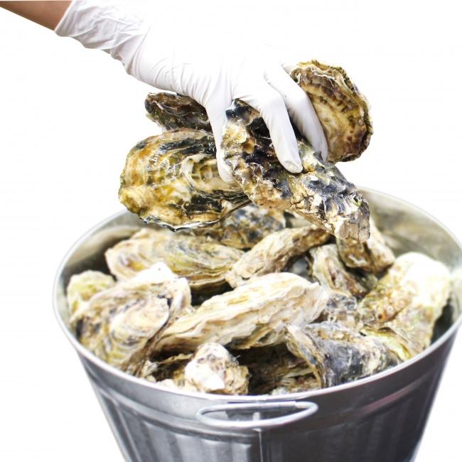 11月23日(金)は牡蠣の日!ニューヨークで人気の「Oyster week」が日本初上陸!ゼネラル・オイスターが牡蠣尽くしのJAPAN OYSTER WEEK開催!