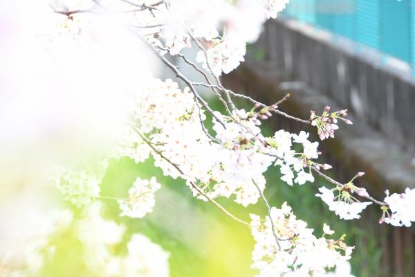 赤坂割烹「器ながや」、6月21日(金)に「食とアートの会」を開催~食と写真のコラボレーション~