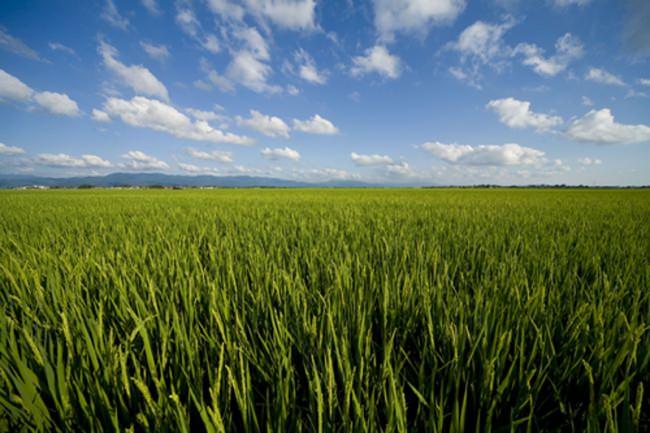 新潟市の田園風景