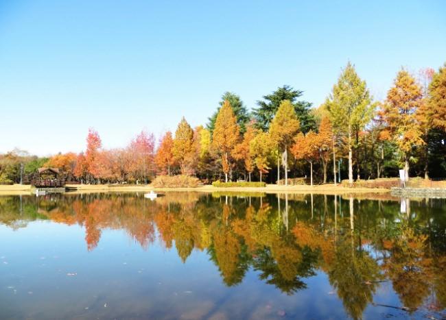 秋には美しい紅葉を楽しめる(埼玉県営彩の森入間公園)